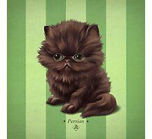 Cataclysm - Persian Kitten - Stripes Photographic Print