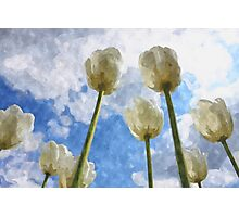 White tulips on cloudy sky watercolor Photographic Print