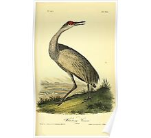 James Audubon Vector Rebuild - The Birds of America - From Drawings Made in the United States and Their Territories V 1-7 1840 - Whooping Crane Young Poster