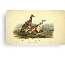 James Audubon Vector Rebuild - The Birds of America - From Drawings Made in the United States and Their Territories V 1-7 1840 - Common American Partridge Canvas Print