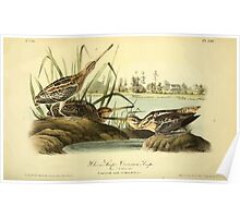 James Audubon Vector Rebuild - The Birds of America - From Drawings Made in the United States and Their Territories V 1-7 1840 - Wilson's Snipe or Common Snipe Poster