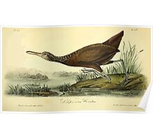 James Audubon Vector Rebuild - The Birds of America - From Drawings Made in the United States and Their Territories V 1-7 1840 - Scolopaceous Courlan Poster