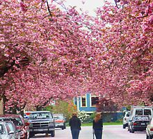 Cherry Blossom Street by Laoghaire