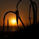 Sunset by Santa Monica bay by Jorge Vismara
