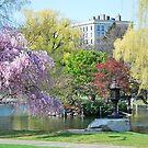Boston Public Garden by AcePhotography