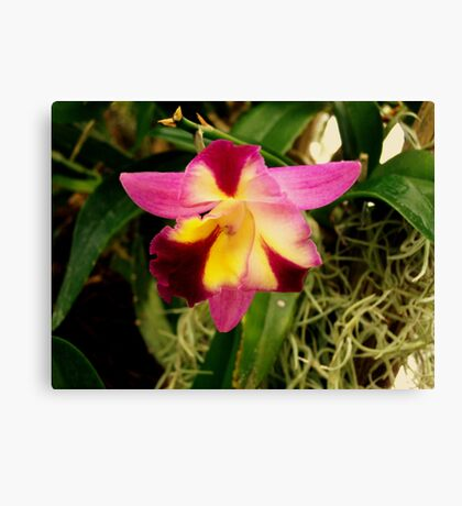 Clever Orchid Canvas Print