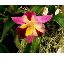 Clever Orchid Photographic Print