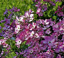 """My Dogwood Dream"" by Patty Boyte"