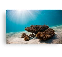 Underwater Morning Canvas Print