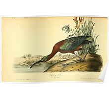 James Audubon Vector Rebuild - The Birds of America - From Drawings Made in the United States and Their Territories V 1-7 1840 - Glossy Ibis Poster