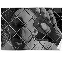 David C - Trapped - Soft B&W Poster