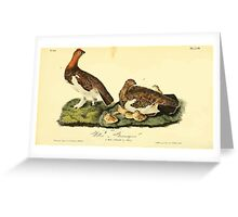 James Audubon Vector Rebuild - The Birds of America - From Drawings Made in the United States and Their Territories V 1-7 1840 - Willow Ptarmigan Greeting Card