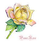 Peace Rose by Lorna Gerard