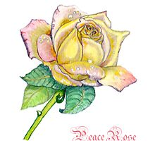 Peace Rose by Lorna Gerard