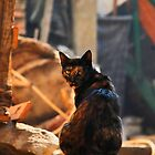 angry cat by hady elwy