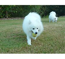 Well-trained Japanese Spitz Jug Photographic Print