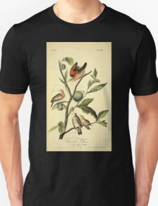 James Audubon Vector Rebuild - The Birds of America - From Drawings Made in the United States and Their Territories V 1-7 1840 - Ground Dove T-Shirt