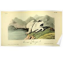 James Audubon Vector Rebuild - The Birds of America - From Drawings Made in the United States and Their Territories V 1-7 1840 - American Ptarmigan Poster