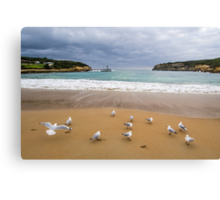 Meeting of the Gulls Canvas Print