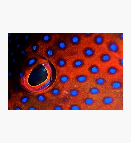 Coral Trout Eye Photographic Print