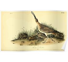 James Audubon Vector Rebuild - The Birds of America - From Drawings Made in the United States and Their Territories V 1-7 1840 - Hudsonian Curlew Poster