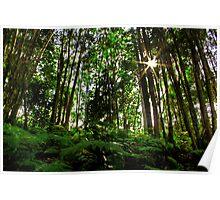 Rainforest Rays Poster