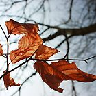 Autumn Leaves by Matt  Williams
