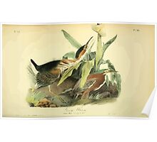 James Audubon Vector Rebuild - The Birds of America - From Drawings Made in the United States and Their Territories V 1-7 1840 - Green Heron Poster