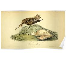James Audubon Vector Rebuild - The Birds of America - From Drawings Made in the United States and Their Territories V 1-7 1840 - Esquimaux Curlew Poster