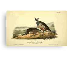 James Audubon Vector Rebuild - The Birds of America - From Drawings Made in the United States and Their Territories V 1-7 1840 - Californian Partridge Canvas Print