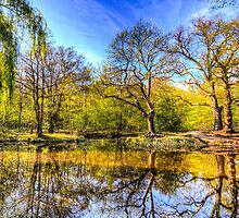 The Reflection Pond by DavidHornchurch