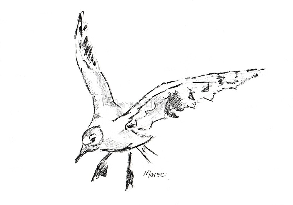 Seagull - Drawing Day 5th June 2010 by Maree  Clarkson