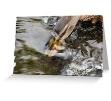 Diving Duck II Greeting Card