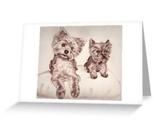 Two Yorkis - Yorkshire Terrier Greeting Card