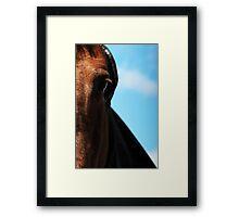 24.4.2015: Horse with Hood Framed Print