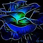 Blue Rose by Tarnee