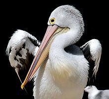 Pelican VIX by Tom Newman
