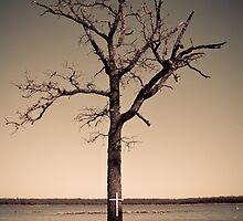 Barron by Daniel Rens