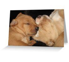 Sister Yellow Puppies Greeting Card