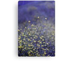 Wildflower Dance Canvas Print