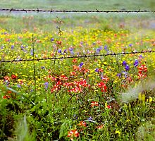 Texas Spring by mockbird
