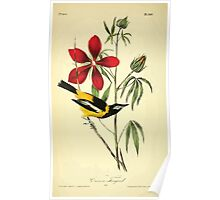 James Audubon Vector Rebuild - The Birds of America - From Drawings Made in the United States and Their Territories V 1-7 1840 - Common Troupial Poster