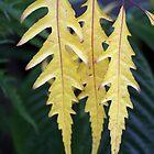 Three leaves by mooksool