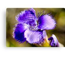 Purple Charmer Canvas Print