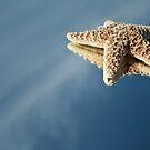 StarFish Reflections by terrebo