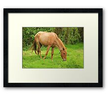 Brown Horse in a Pasture Framed Print