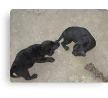 Puppy Tail Tug-O-War Canvas Print