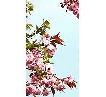 Cherry Blossom... Photographic Print