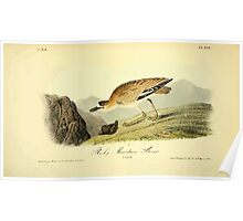 James Audubon Vector Rebuild - The Birds of America - From Drawings Made in the United States and Their Territories V 1-7 1840 - Rocky Mountain Plover Poster