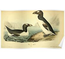 James Audubon Vector Rebuild - The Birds of America - From Drawings Made in the United States and Their Territories V 1-7 1840 - Great Auk Poster